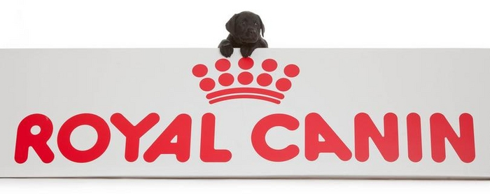 Royal Canin to sponsor Hearing Dog Puppy