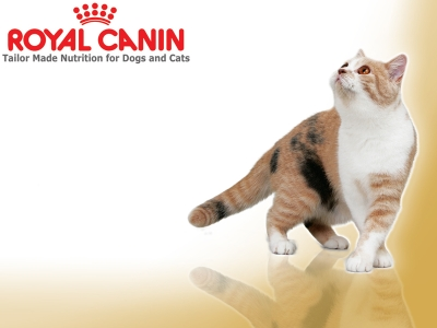 Royal Canin Kitty Wallpaper