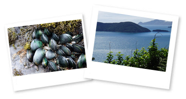 Images of mussels and the New Zealandcoast