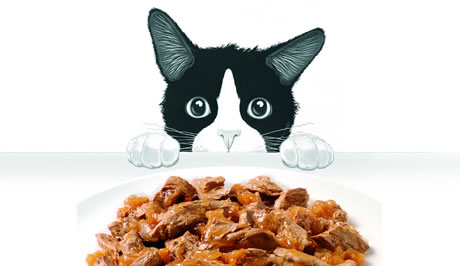 Best Cat Food For A Cat With No Teeth