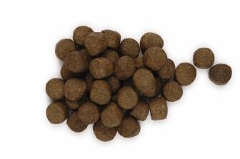 Dog Food Equal To Hills Zd