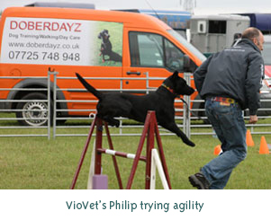 VioVet's Philip trying agility